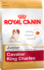 cavalier-king-charles-junior_productImage
